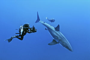 Diver Takes Photo Of a Fish